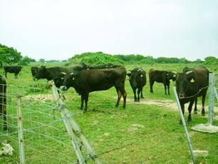 地元産のブランド牛の牧場